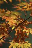 秋天森林叶子 免版税库存图片