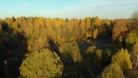 秋天森林和一个小湖概略的看法  影视素材