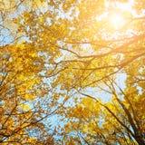 秋天森林和太阳 库存照片