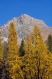 秋天森林和山 库存照片