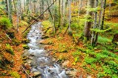 秋天森林和河 免版税库存照片