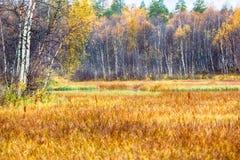 秋天森林和沼泽,森林裙子 免版税图库摄影