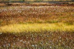 秋天森林和沼泽 免版税图库摄影