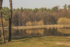 秋天森林和湖 免版税图库摄影