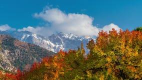 秋天森林和色的树的Timelapse在山 影视素材