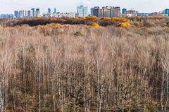 秋天森林和街道有都市房子的 免版税库存图片