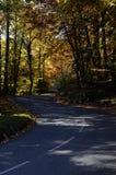 秋天森林和路 免版税库存图片