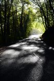秋天森林和路 库存照片