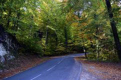 秋天森林和路 免版税图库摄影