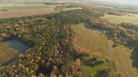 秋天森林和领域有鸟` s眼睛视图和在晴朗的天气 秋天金黄森林多彩多姿的油漆 俄国 股票录像