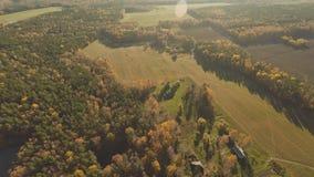 秋天森林和领域有鸟` s眼睛视图和在晴朗的天气 秋天金黄森林多彩多姿的油漆 俄国 股票视频