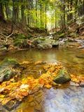 秋天森林和水 免版税库存照片