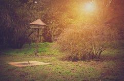 秋天森林在一个晴天 免版税库存图片