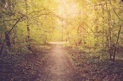 秋天森林在一个晴天 库存图片