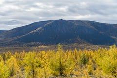 秋天森林在一好日子在俄罗斯 库存照片