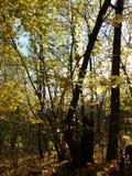 秋天森林在一清楚的好日子 库存照片