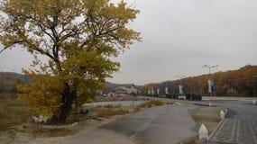 秋天森林在城市德聂伯级的中心 库存照片