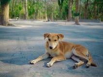 秋天森林在泰国 免版税库存图片