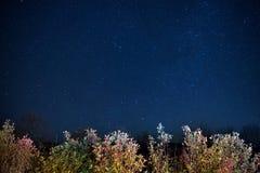 秋天森林在蓝色黑暗的夜空下 库存照片
