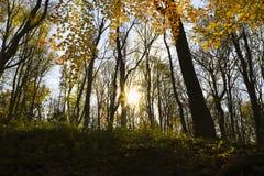 秋天森林在阳光下光芒 免版税库存图片