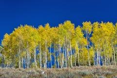 秋天森林在10月爱达荷 库存图片