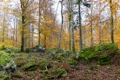 秋天森林在11月 免版税库存图片