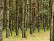 秋天森林在10月 免版税图库摄影
