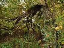 秋天森林在10月 库存照片