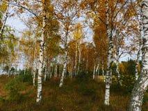秋天森林在10月 图库摄影