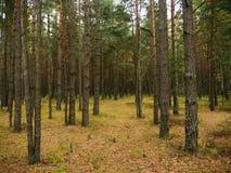 秋天森林在10月 免版税库存照片