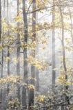 秋天森林在晴朗的早晨 免版税库存照片