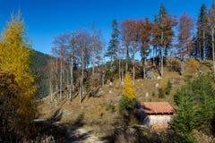 秋天森林在Allgäu 库存照片