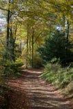 秋天森林地在科茨沃尔德英国 免版税库存图片