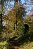 秋天森林地在科茨沃尔德英国 免版税图库摄影