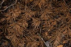 秋天森林地板的织地不很细背景 库存图片