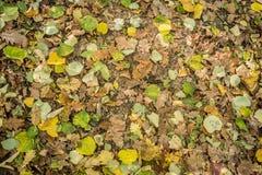 秋天森林地板 免版税库存照片
