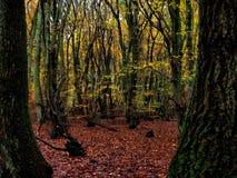 秋天森林地英国英国 免版税库存图片
