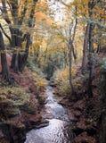 秋天森林地虽则小河赛跑秋天森林山坡 免版税图库摄影