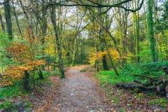 秋天森林地道路 库存图片
