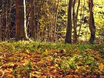秋天森林地面 库存照片