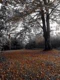 秋天森林地 库存照片