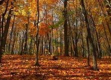 秋天森林场面 库存照片
