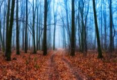 秋天森林太阳光芒在森林里 库存照片