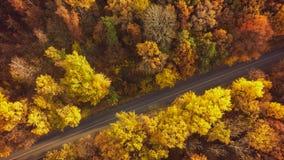 秋天森林寄生虫空中射击,叶子树顶上的看法  库存图片