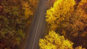 秋天森林寄生虫空中射击,叶子树顶上的看法  库存照片