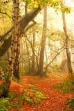 秋天森林导致 免版税库存照片