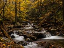 秋天森林小河 库存图片