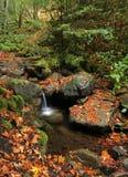 秋天森林小的瀑布 免版税库存照片