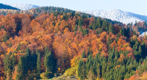 秋天森林山 库存照片
