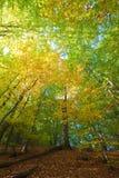 秋天森林山 图库摄影